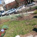 Smith Park Advisory Council - Earth Day 2014 (13)