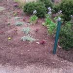 Smith Park Advisory Council - Earth Day 2014 (28)