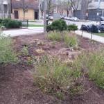 Smith Park Advisory Council - Earth Day 2014 (35)