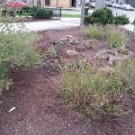 Smith Park Advisory Council - Earth Day 2014 (36)
