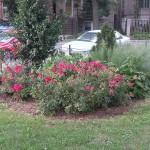 Smith Park Advisory Council - Earth Day 2014 (48)