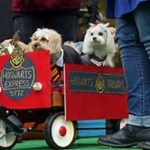 West Town Dog Parade