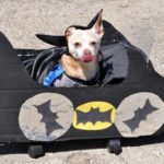 Batman wins First place prize for the Smith Park West Town Dog Parade